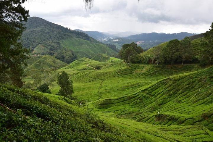 Les Cameron Highlands: une escale au cœur des plantations dethé