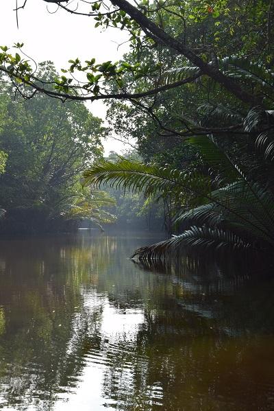 mangrove-malaisie