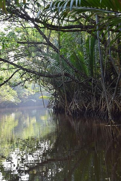 paletuvier-mangrove-cherating