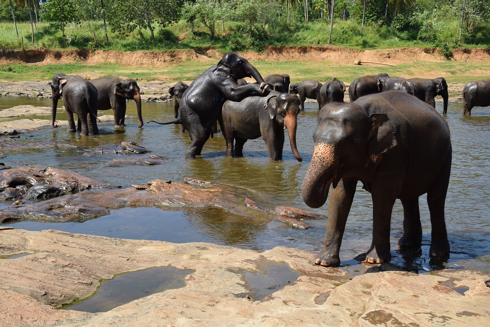 bain-elephants-sri-lanka
